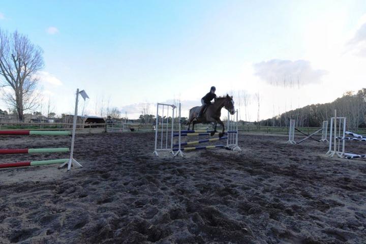 Centre Equestre Le Cheval Autrement 17570 La Palmyre Les